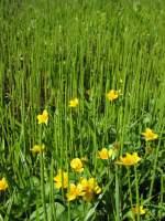 krušnohorská květena